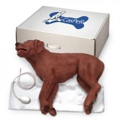 Model zvířecí - pes CasPeR